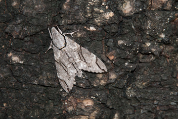 Brown moth on the tree.