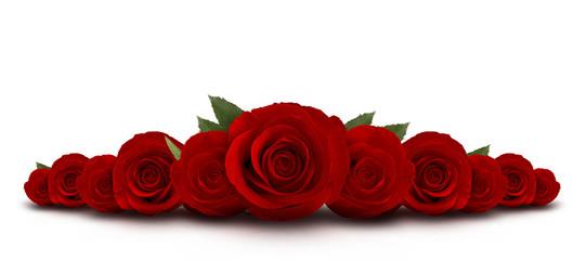 rode rozen bloem met witte achtergrond