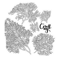 Graphic coral collection