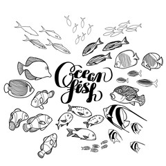 Collection of  ocean fish