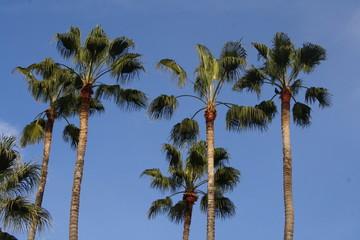 Palmen im Dezember