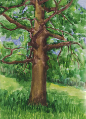 Oak. The big tree in the forest. Watercolor painting