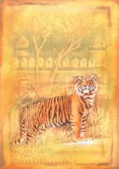 Tiger illustration for book cover