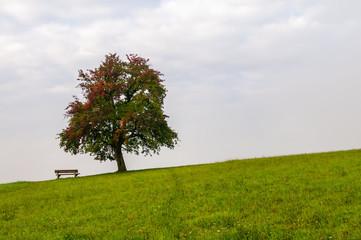 Tree on top of hill - autumn