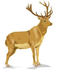 Illustration  of deer, vector cartoon image
