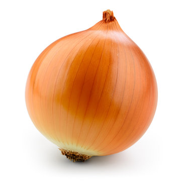 Fresh onion bulb isolated on white. With clipping path.