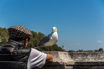 Old man and bird leaning on railing of old stone bridge in Rome, Italy.
