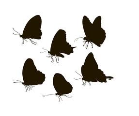 Vector silhouette six butterflies