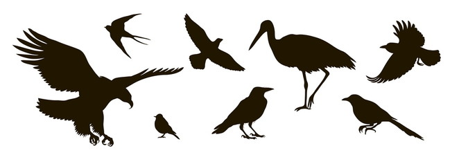 vector silhouette of eightt birds