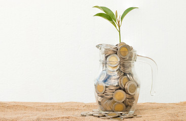 save money concept by plant growing out of coins