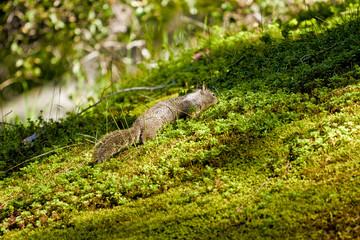 squirrel in green landscape