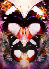 Tiger and butterfly with ornamental mandala on an abstract background, with spot structures.