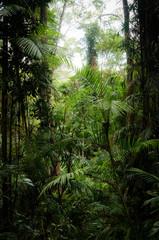 Dense rainforest vegetation