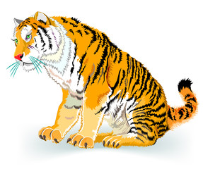 Illustration of tiger, vector cartoon image.