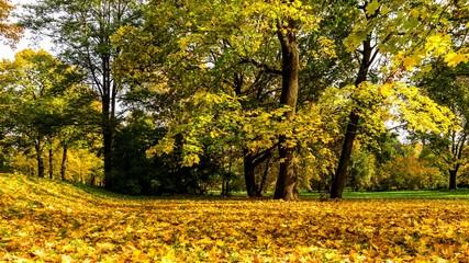 gelbes herbstlaub im park