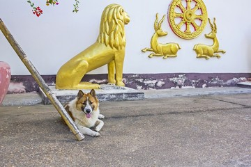 Relaxing dog on concrete floor and gold Lion, deers - background