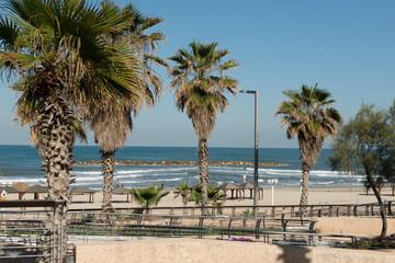 Tel Aviv beach with palms