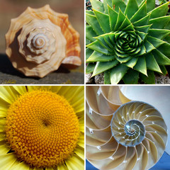 Beautiful Golden Ratio Spirals in Nature