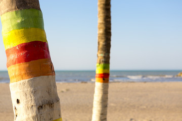 Colored palm trees and beach in Colombia