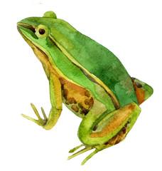 watercolor frog