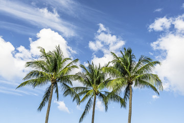 Tropical Palms with blue sky background