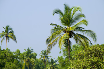 palm grove in India