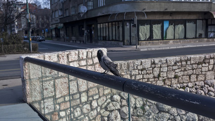 Raven on the bridge
