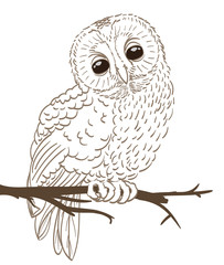 owl sitting on a twig hand drawing. vector