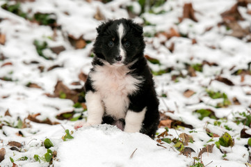 The puppy sits in the snow in the Park