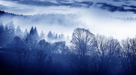 morning fog and a forest