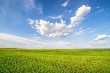 Blue sky and green grass field