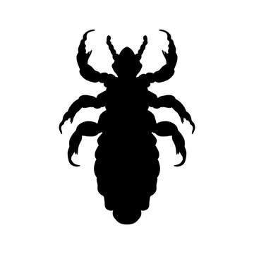 Silhouette of  head human louse. Pediculus humanus capitis. louse  silhouette isolated on white background. louse. Vector