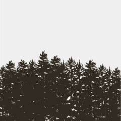 Black pine tree forest isolated on white grey background
