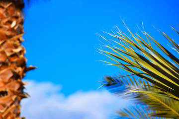 palm and palm tree on the sky