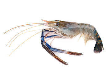 Fresh shrimp,Giant freshwater prawn on white