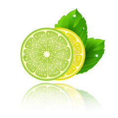 lime lemon and mint on white background - vector illustration