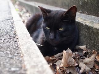 溝の中の黒猫