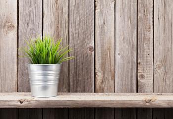 Plant in flowerpot on shelf