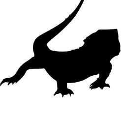 a lizard