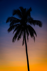 Silhouette coconut palm trees at twilight time