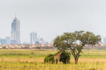 Giraffe im Nairobi Nationalpark im Hintergrund die Skyline