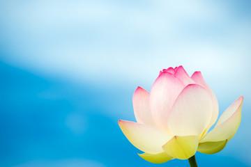 青空をバックにした蓮の花