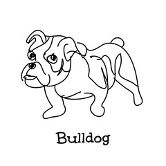 Young bulldog