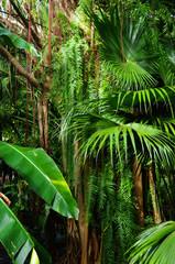 La Réunion - Un coin de jungle : lianes et fougères
