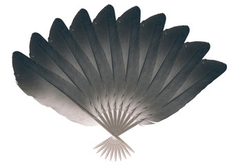Feather fan / Feather fan on white background.