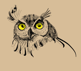 owl drawing vector illustration