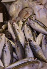 Fresh sardines and anchovies