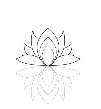 Lotus flower isolated on white vector, fiore di loto vettoriale isolato su sfondo bianco