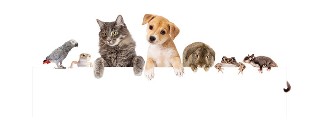 Wall Mural - Group of Domestic Pets Over White Banner