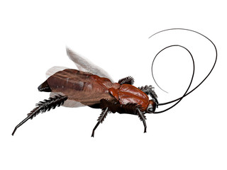 a computer rendered illustration of a cockroach isolated on white